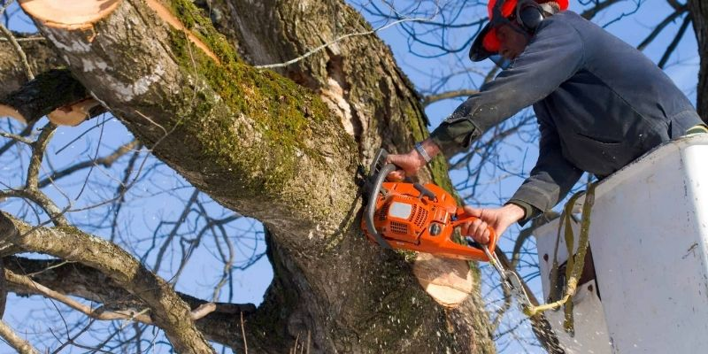 How to Cut Tree Limbs That are too High to Reach
